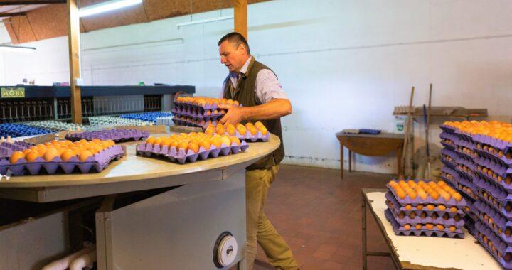 north wales news Clyttir Farm